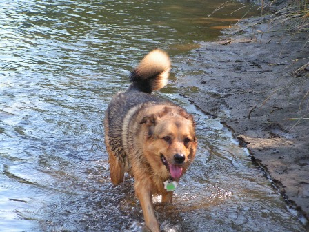 lassie-in-the-creek.jpg