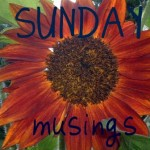 sunflower-sunday-musings