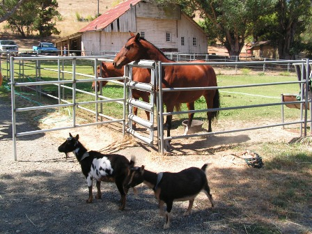 Animals And The Old Barn