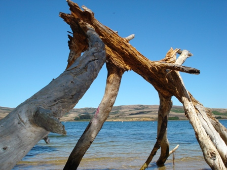 driftwood at shell beach